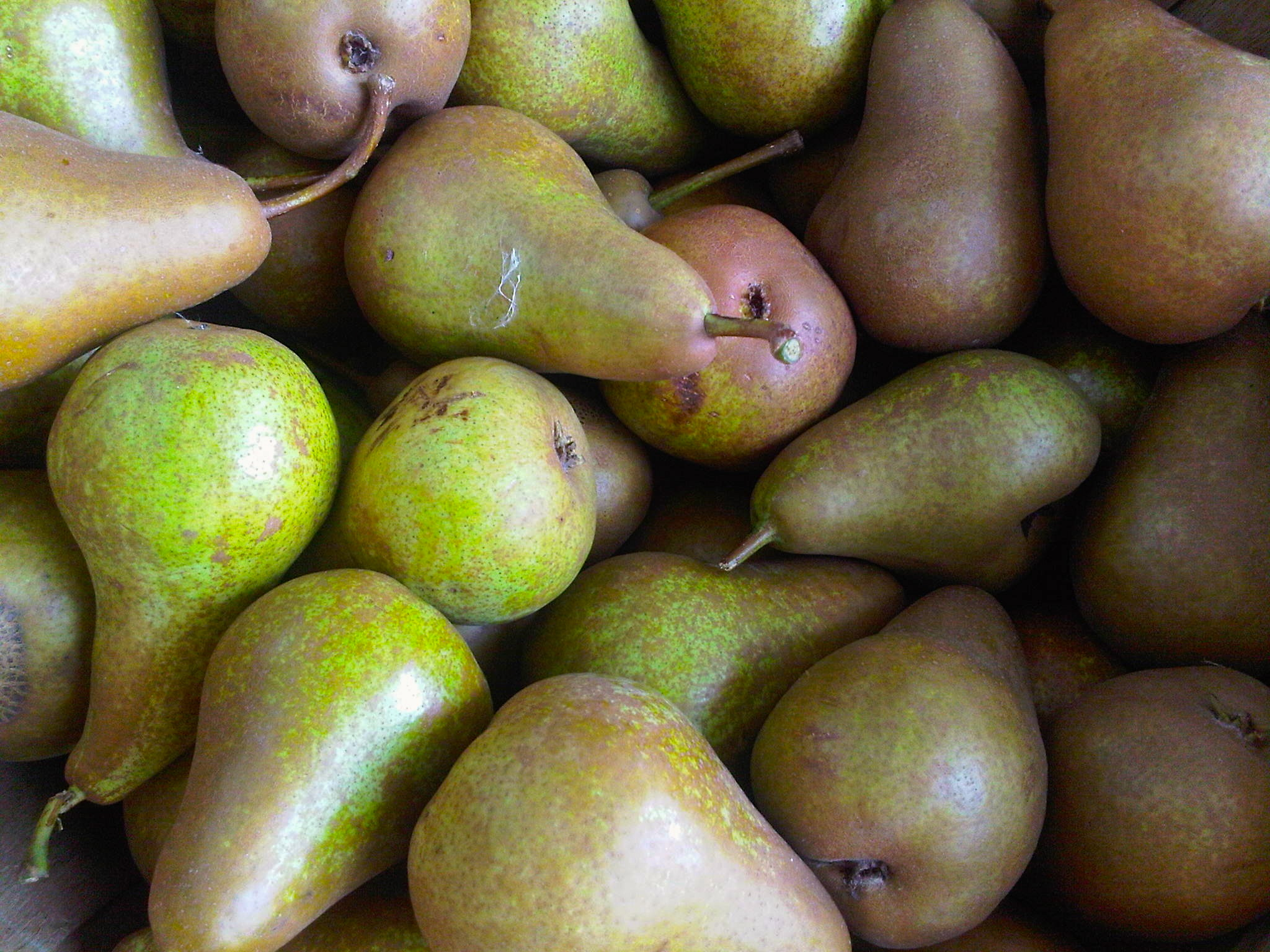 close up photo of bosc pears