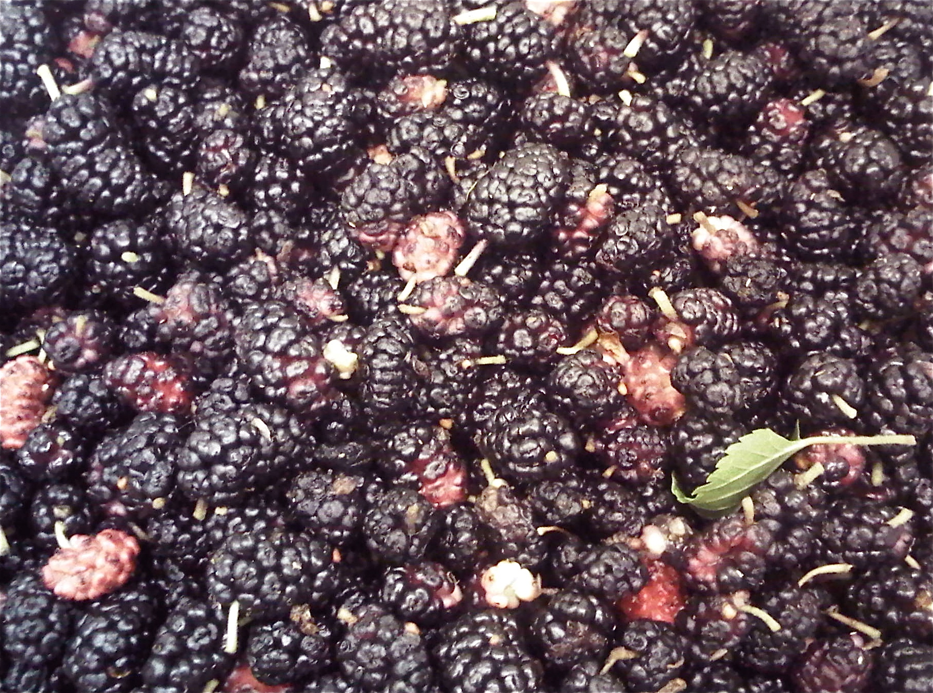 This is a photo of mulberries